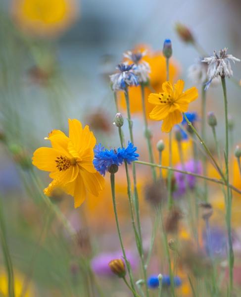 summer rain bliss by annettep38