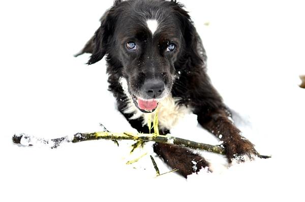 Bruce\'s bark by ste_p0270