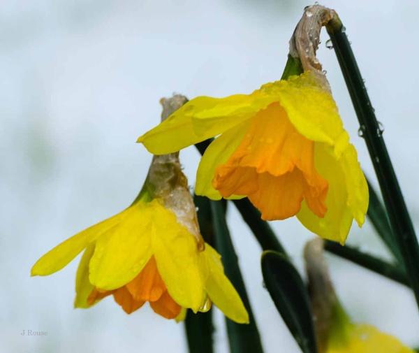 Spring time - Honest