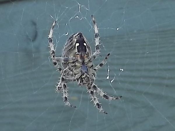Spider by Derek_Fearn