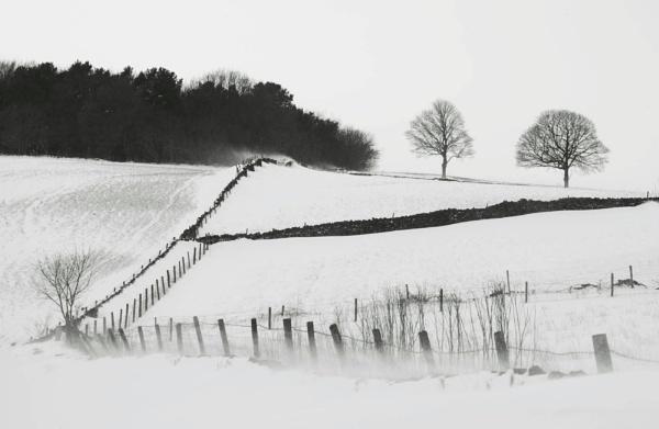 The Snow Fields
