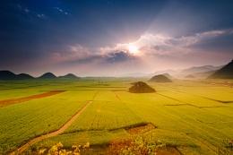 Fabulous rapeseed landscape