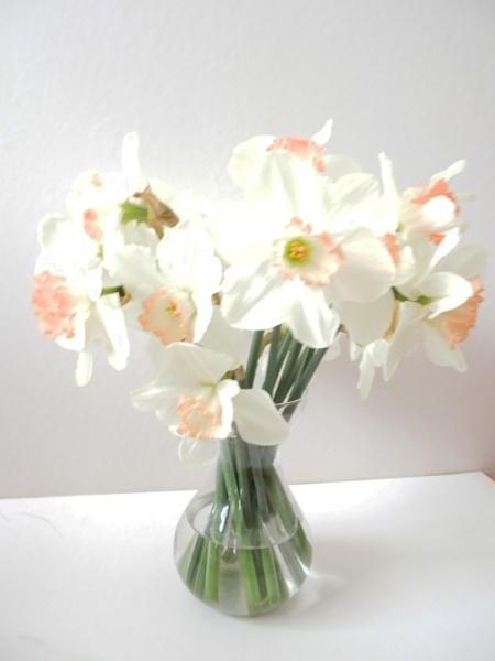 Daffodill\'s by Mr_Squirrel