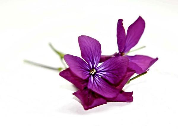 Little flowers by pp1