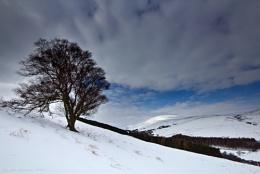 A Snowy Cheviot