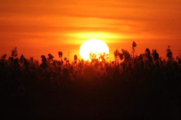 shy sun by JudyS