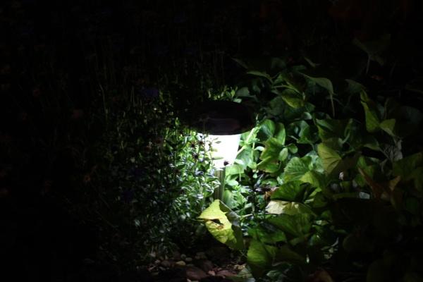 Garden Lights by Sone