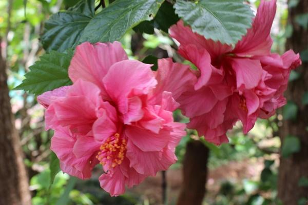 Pink Plesure by Sone