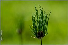 simply grass