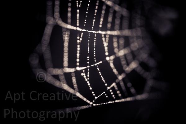 Web by blastedkane
