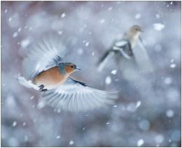 Snow Birds....