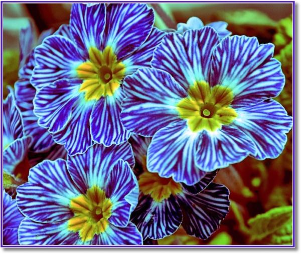 *Denim Blue 3* by Rock