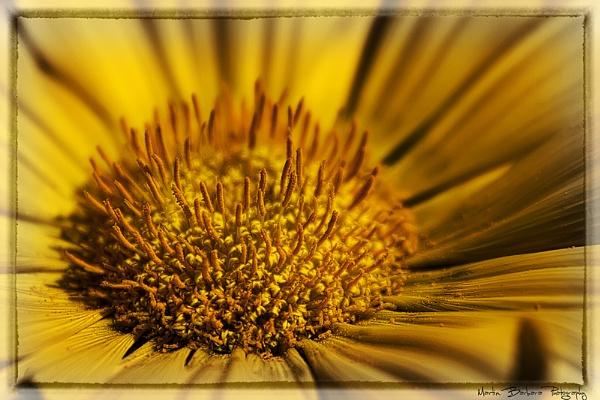 sun flower by fix