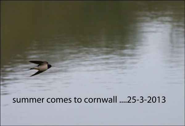 summer comes to Cornwall by cornish_chris