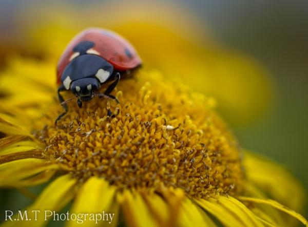 Ladybird by RustyBoy