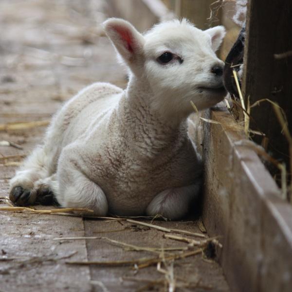 Ewe are Beautiful by HeatherR