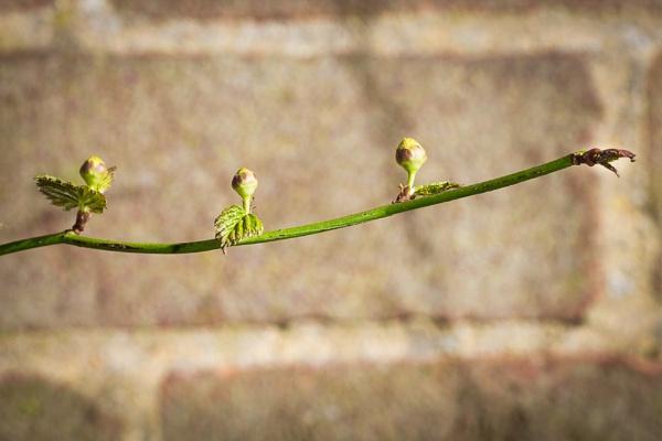 Spring is coming. by JackAllTog