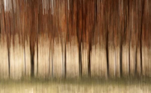 Beech Hedge Blur by Irishkate