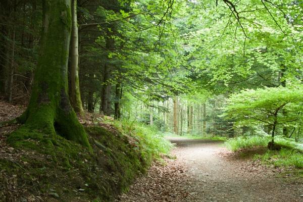 Manesty Woods, Derwent Water by Juditha