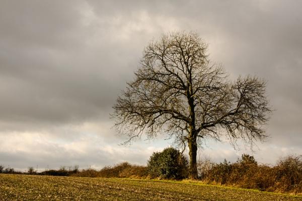 A tree in winter by Juditha