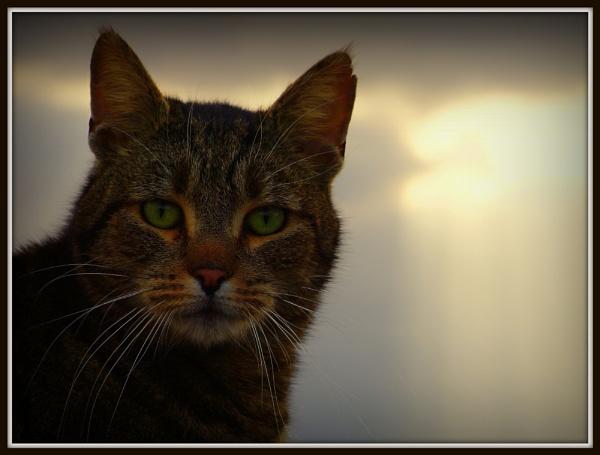 cat at sunset by sirhcelah100