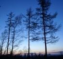 Naked trees... BRRRR! by cjlar