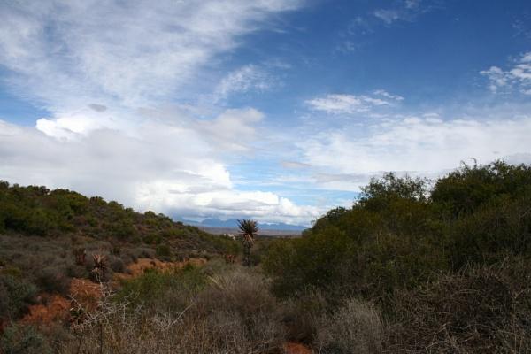landscape by JudyS