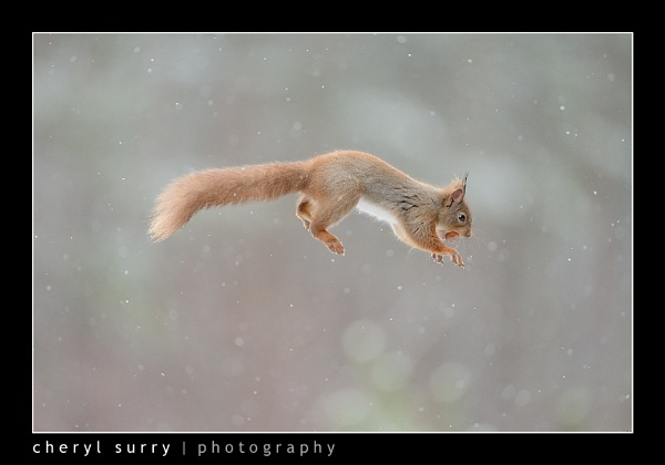Jumping Squirrel by csurry