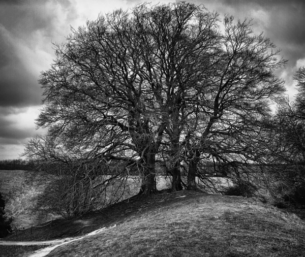 Avebury Tree by SueEley