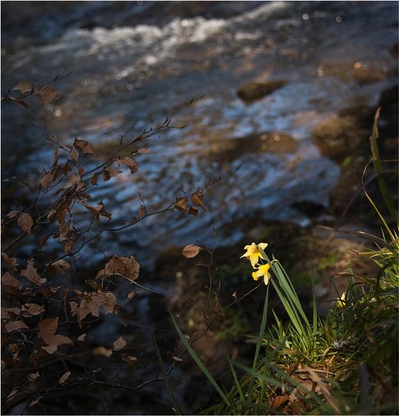 Wild Flowers by RockArea