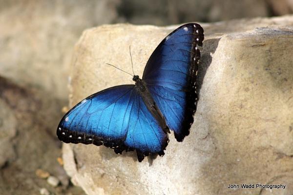 Butterfly by johnlwadd