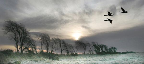 Winter Flight Solway by aliciabeesley