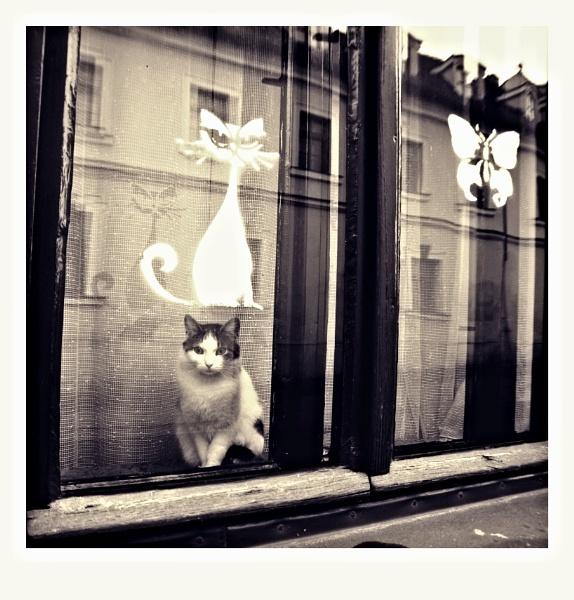 cat over cat by fasfoto