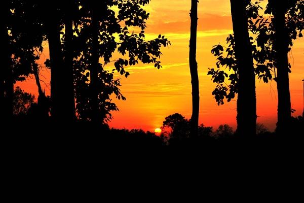 Jungle Sunset by konu