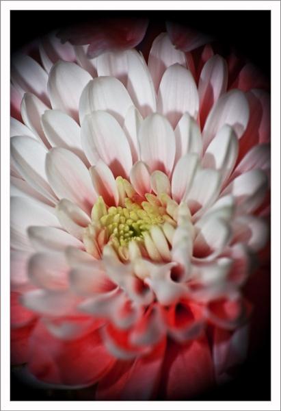 Flower by Jat_Riski