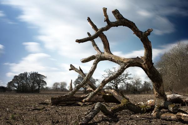 Dead Tree by TSP