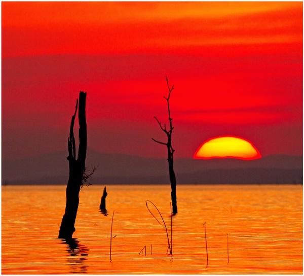 Gaunt Sunrise by accipiter
