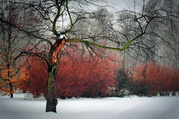 winter nightmare II by atenytom