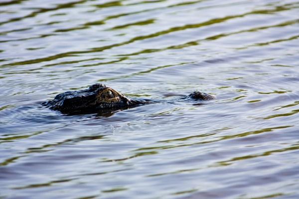 Fishing in Florida - Hazards! by sdixon2380