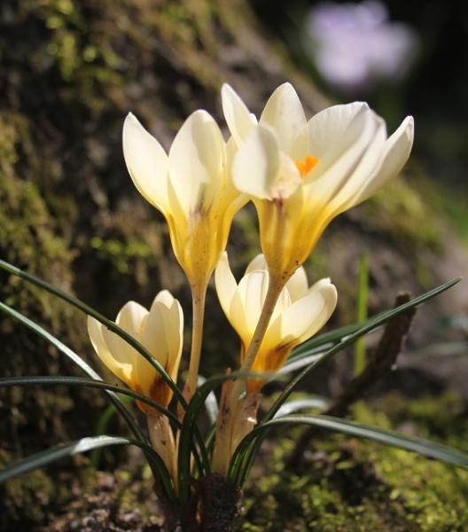 Flower III by kish123