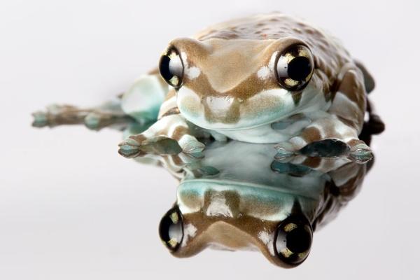 Big Eyes by geoffash26