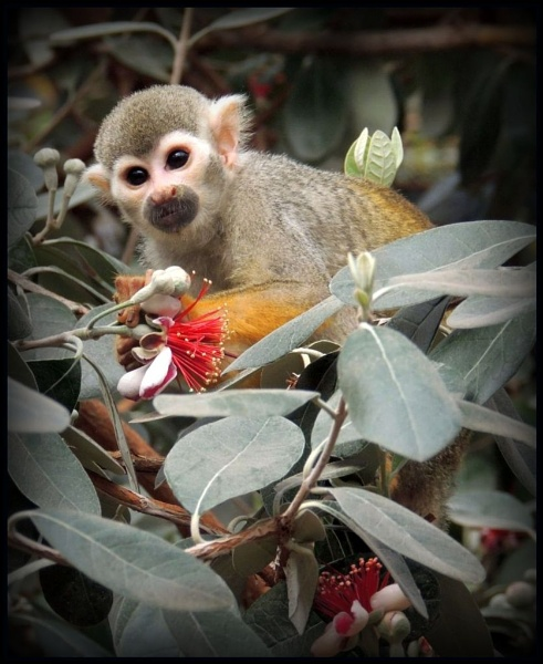 Cheeky squirrel monkey by kathrynlouise
