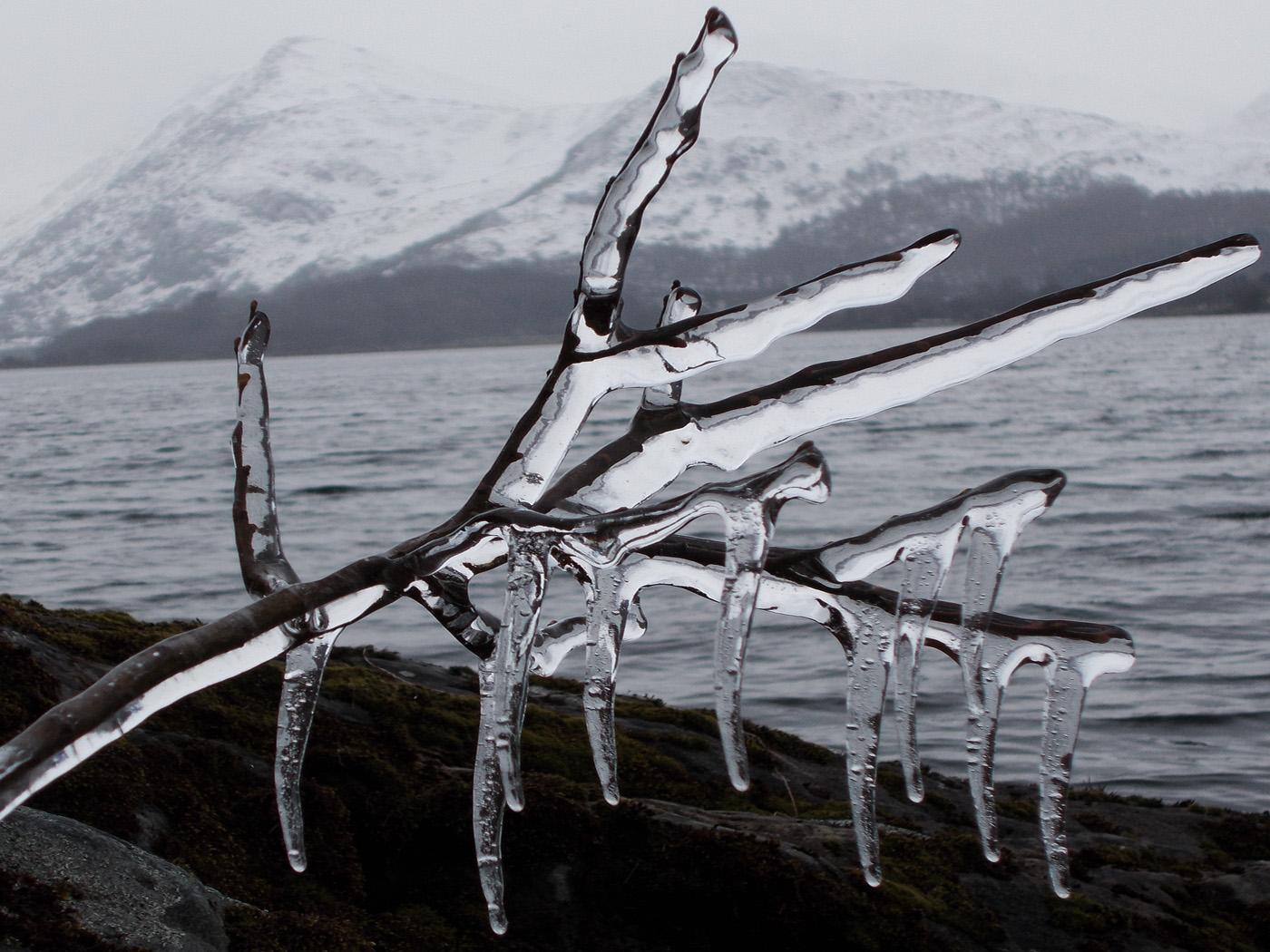A Frozen Twig