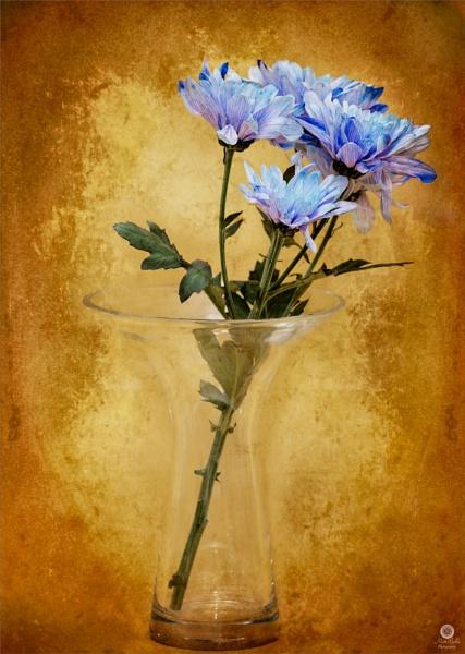 Rustic Bloom