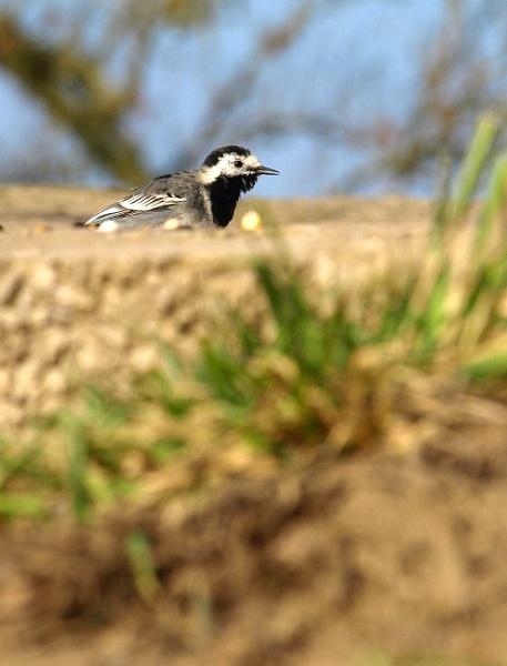 Bird\'s eye view by turniptowers