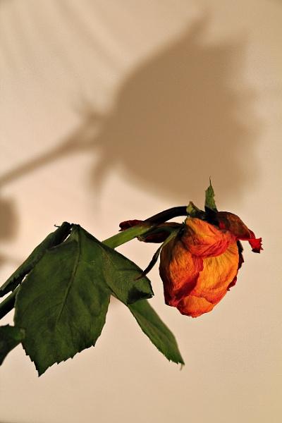 Are you flourishing? by FlawedDesign