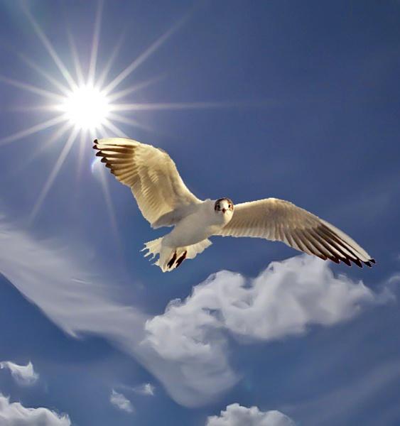 Gull by pp1