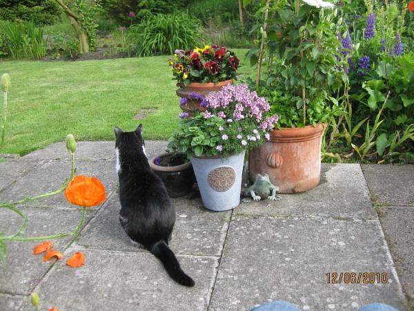 Garden Watch! by freckleface1