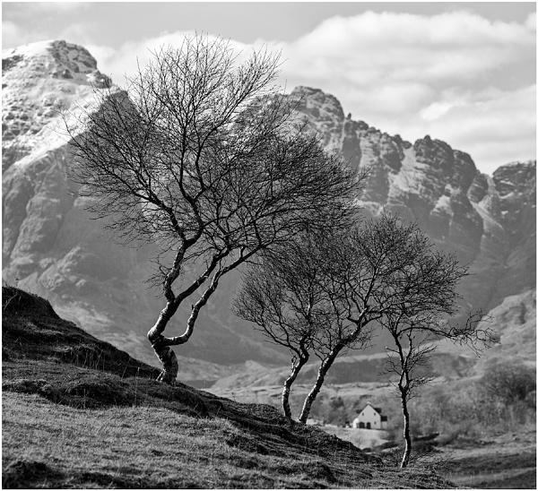 Blaven Birch... by Scottishlandscapes