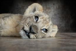 Who Woke Me Up???